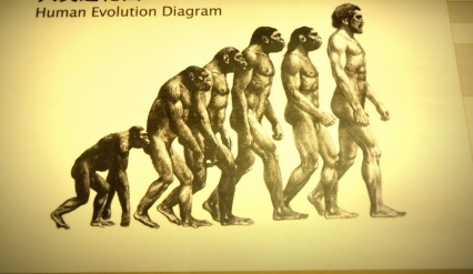 human-evolution1.jpg