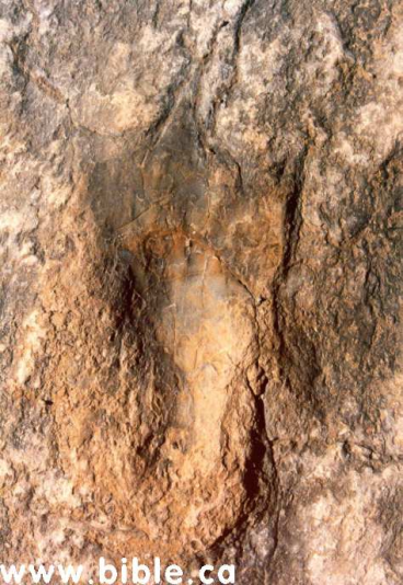 man footprint in dino footprint
